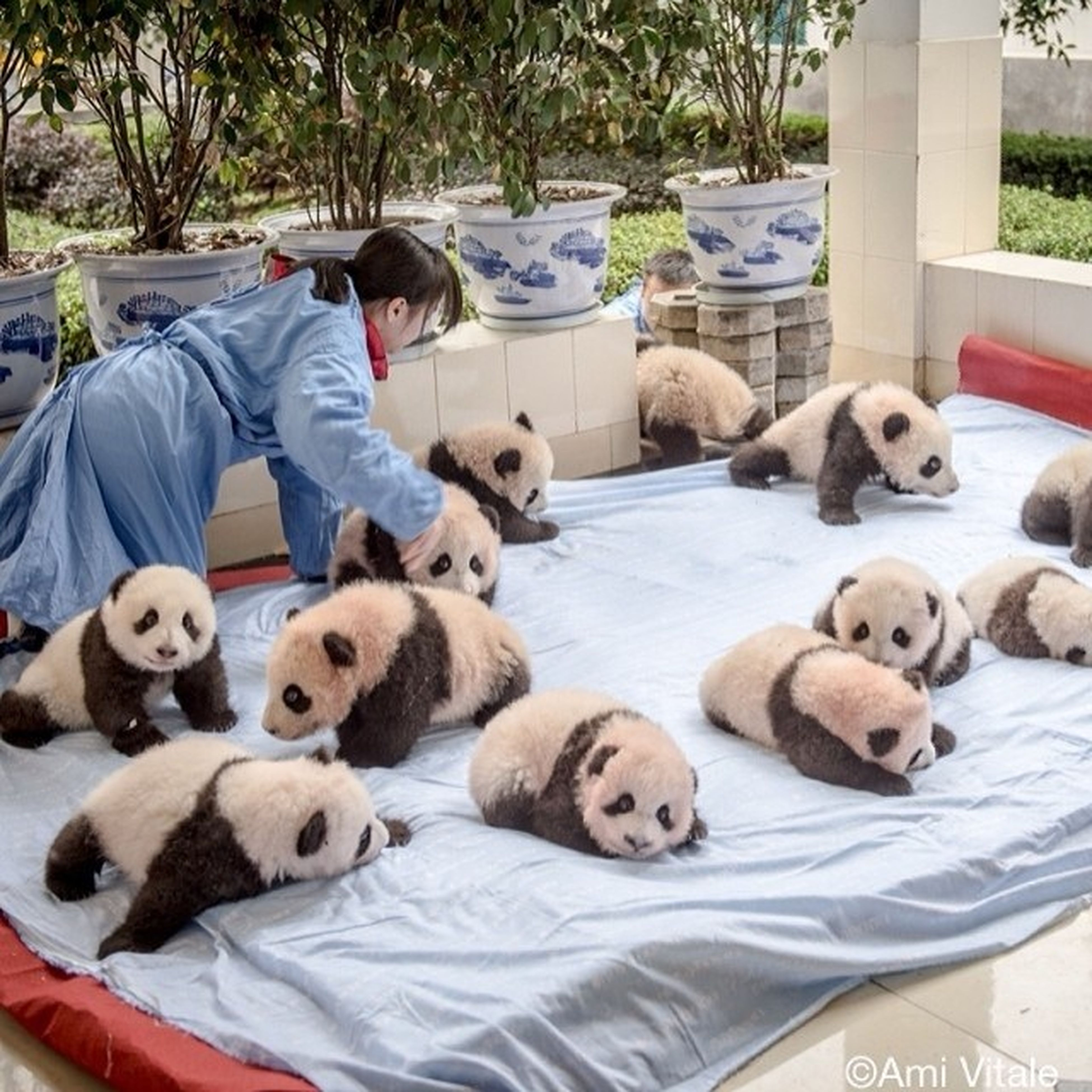animal themes, domestic animals, relaxation, lying down, mammal, resting, pets, togetherness, two animals, relaxing, dog, portrait, day, looking at camera, sitting, stuffed toy, sleeping, field, high angle view, outdoors