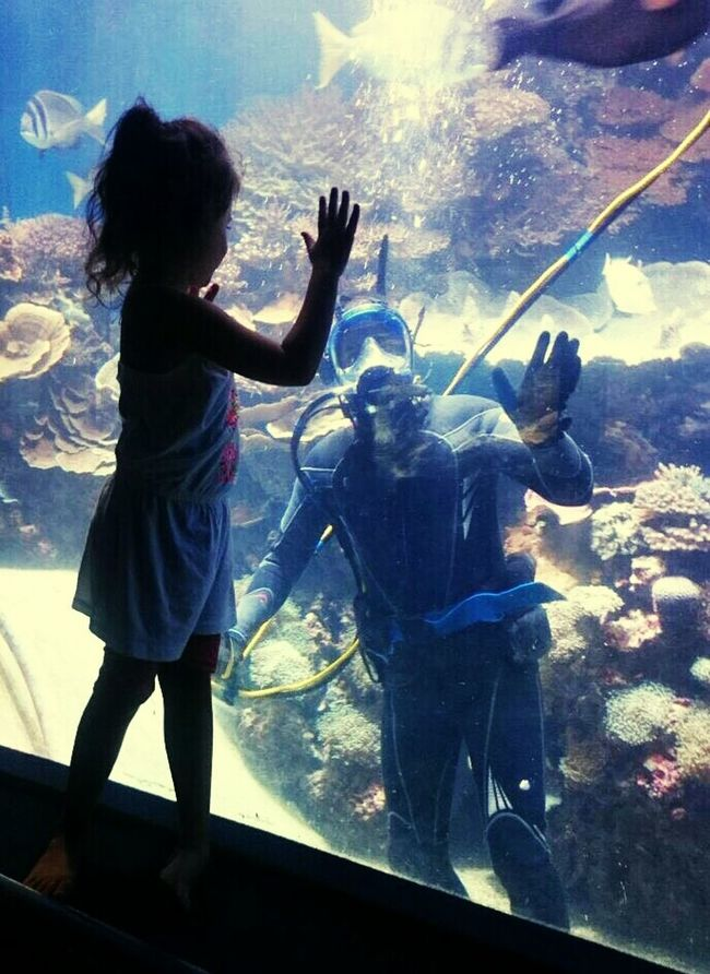 Summer Child Girl Children Photography In The Water Diving Hello Window Observatorium Underwater Diver