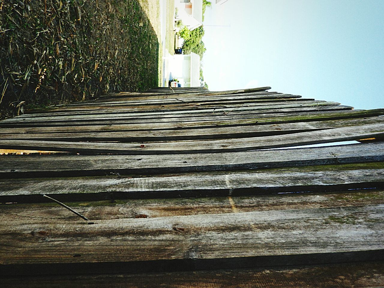 steps, day, outdoors, no people, nature, built structure, growth, building exterior, tree, architecture, grass, sky
