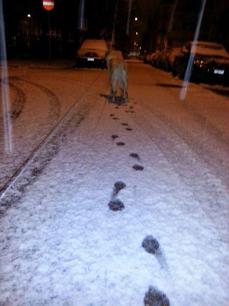 My Winter Favorites Snow Doginsnow Wintertime Winterlove Schnee Spuren Im Schnee Hundespuren Im Schnee Dog Walking Dog In Snow