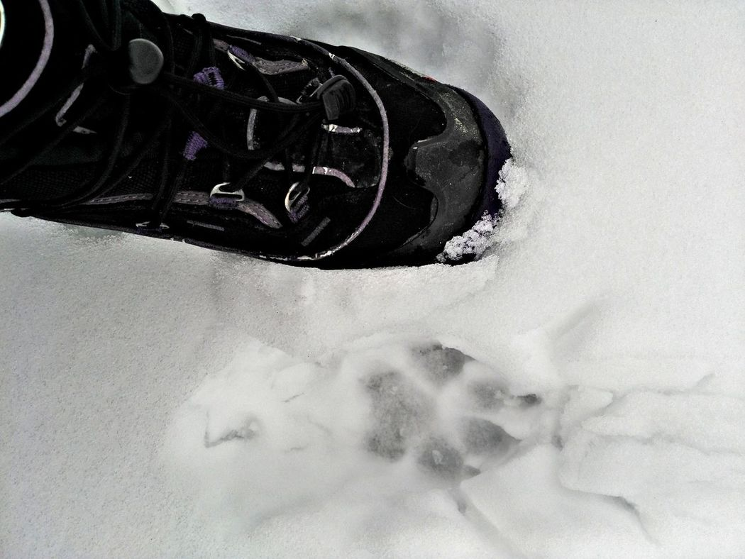 big doggy paw Close Up Foot FootPrint Winter Cold Temperature Cold Weather Snow Paw Print Paw Print In The Snow Boot Foot Human Foot Comparison Personal Perspective My Point Of View Animal Themes Animal Footprints Animal Print Abstract Abstract By Liv'n The Dream View From Above Left Foot Side By Side Close-up Human Body Part Day One Person People