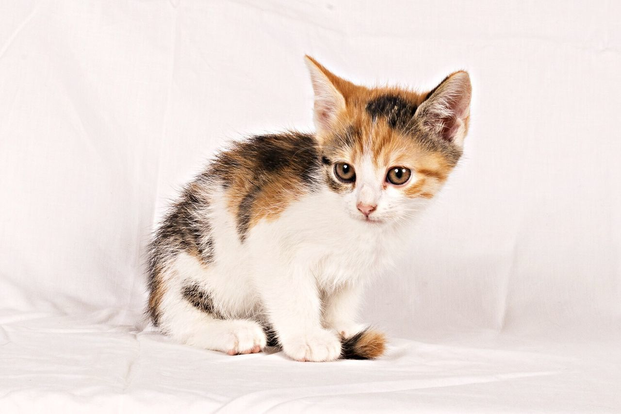 Beautiful stock photos of baby animals, Domestic Cat, Full Length, Horizontal, Kitten