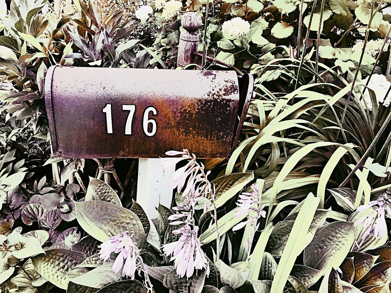 Mailbox Art 176 Mailbox Number Digits Numbers Mail Box Art Fine Art Photography StillLifePhotography Still Life Garden Home Mailboxes Vintage Vintage Style Artistic Green Bushes Nature Gardens Garden Flowers Express Expression Rusty Lifestyles Home Sweet Home Decor