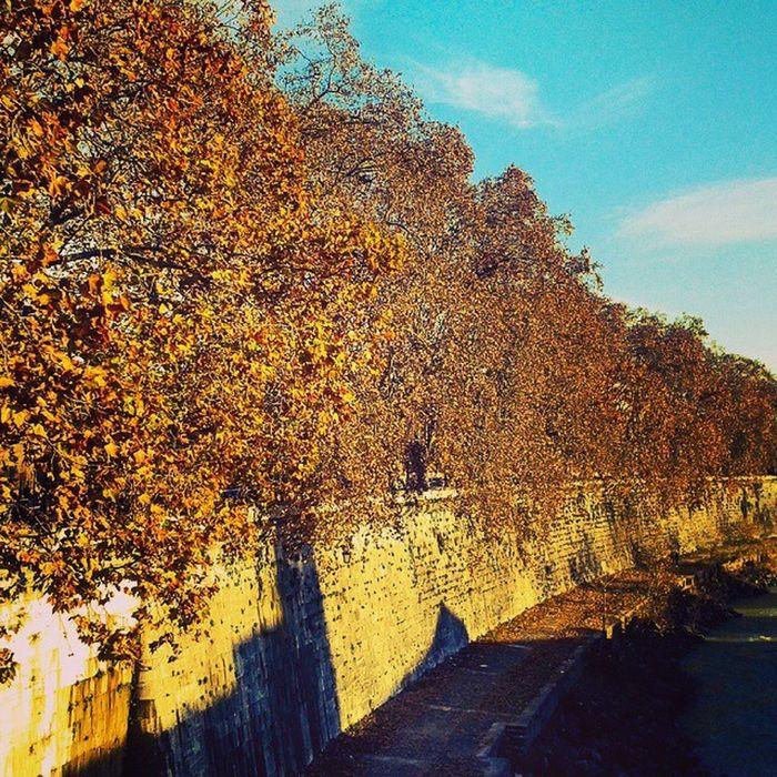 L'aria di Roma. Isolatiberina Tevere Fiumi Roma Alberi Colorati a Natale Natura Lungotevere
