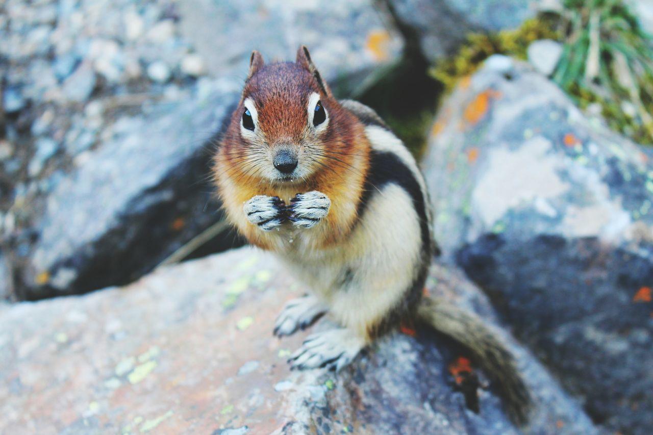 Beautiful stock photos of squirrel, Alertness, Close-Up, Day, Full Length