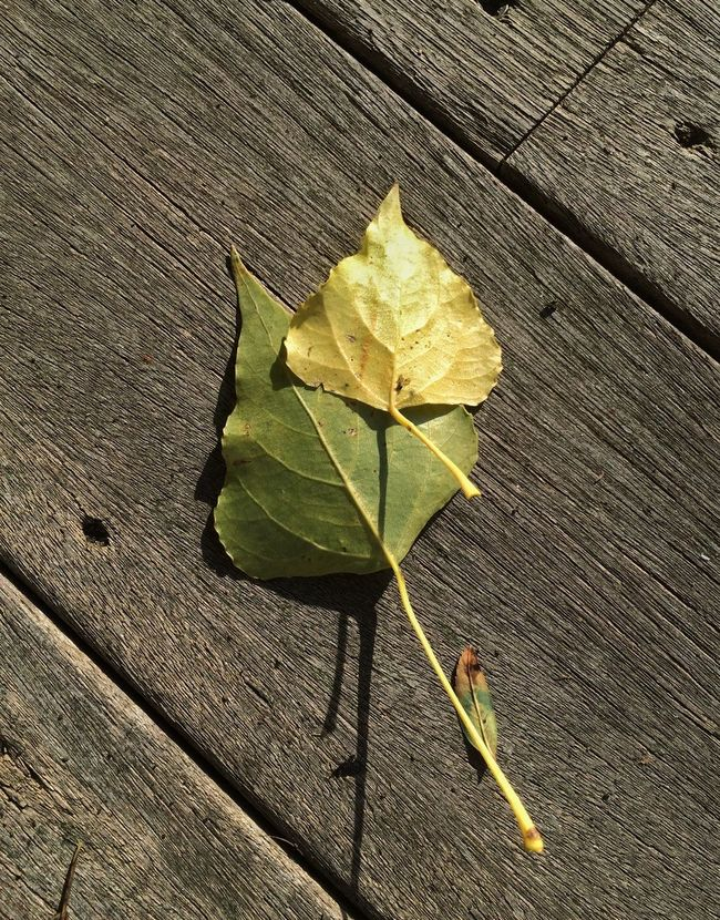 Fall Beauty Leaves Nature_collection Nature's Composition NEM Still Life Lookingdown Simplicity