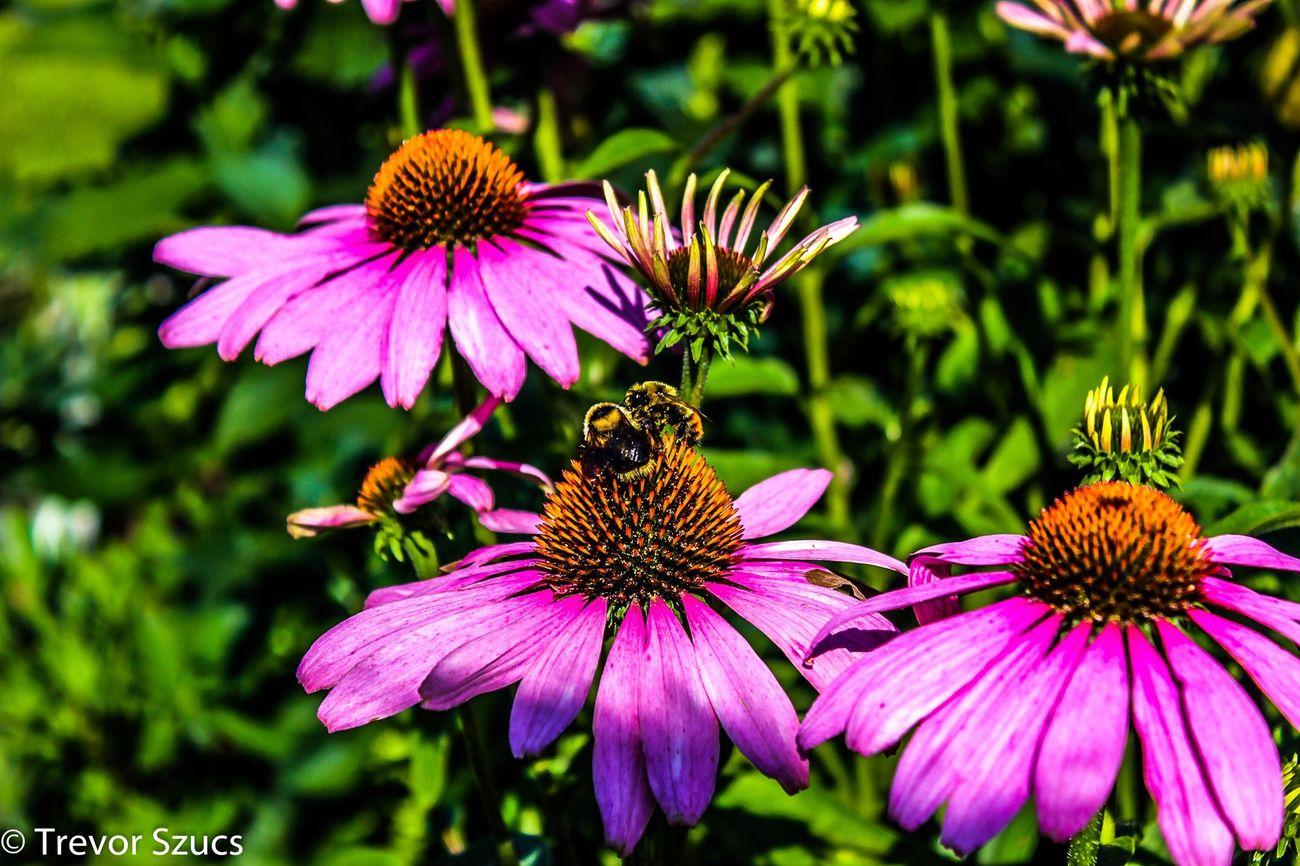 Gmas Gden Flowers