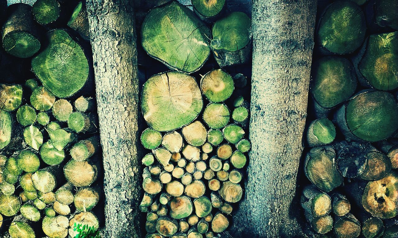 Beautiful stock photos of wood, Backgrounds, Day, Deforestation, Environmental Issues