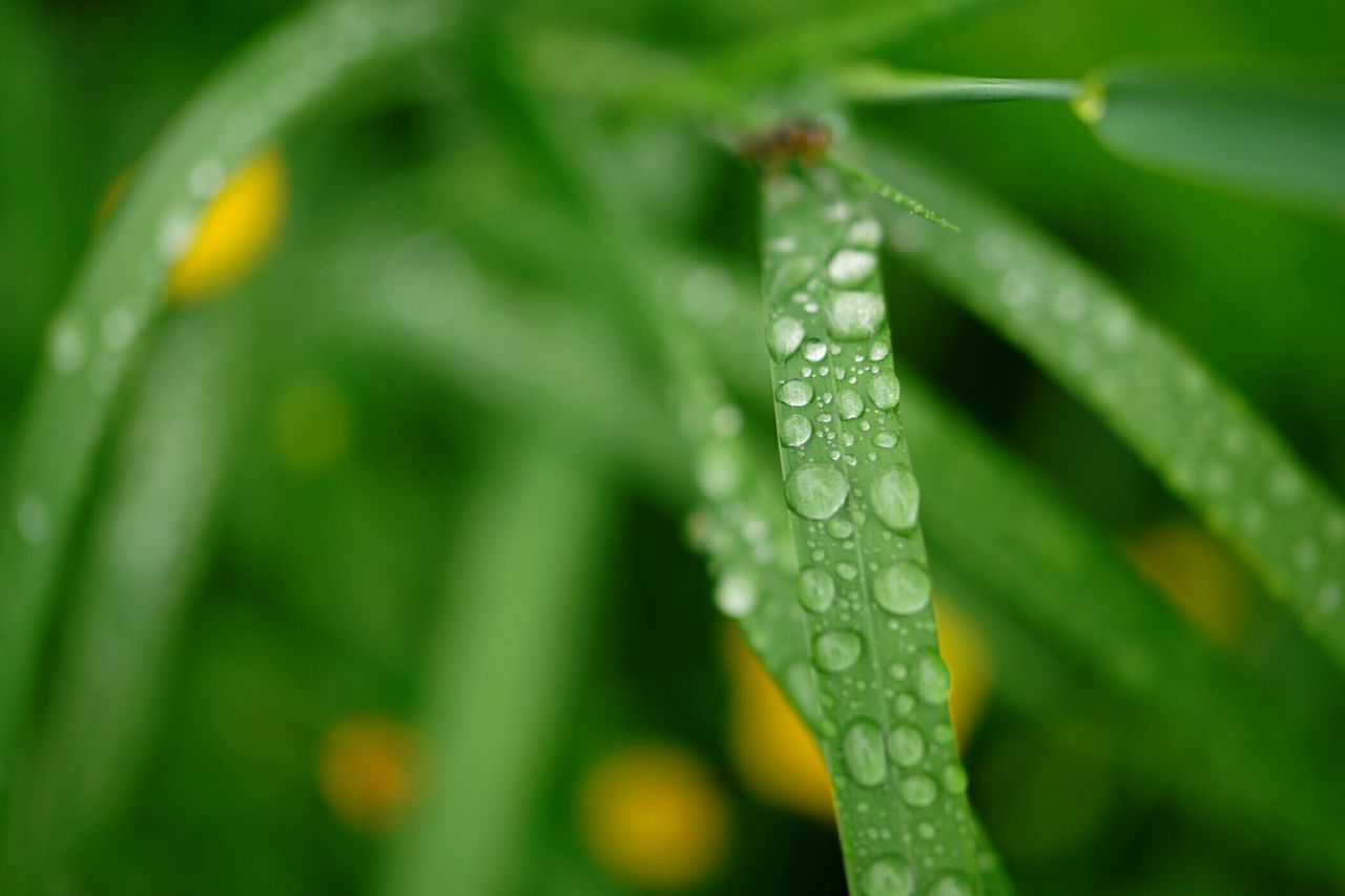 Water Drops On Leaves Macro Nature Water Droplets Waterdrops Finland Summer Finland Fresh Nature Fresh And Beautiful Nature Photography Macro Drops After Rain Macro Photography Water Drop Photography After The Rain Water Drop Water Drops Nature_collection Summer2016 Water Drops On Grass
