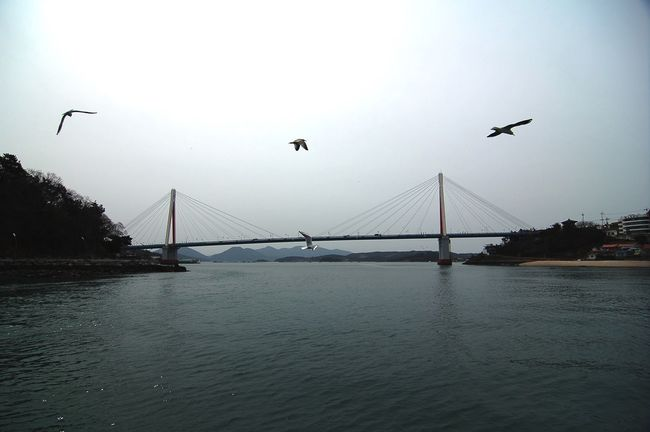 Dolsan Bridge Seagulls Hello World Hi! Travel Sea Taking Photos Nikon D50 On The Ferry Pray For Paris