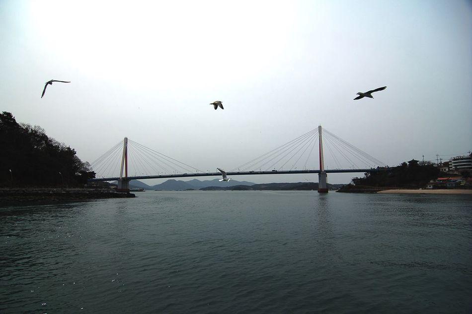 Dolsan Bridge Seagulls Hello World Hi! Travel Sea Taking Photos Nikon D50 On The Ferry Pray For Paris