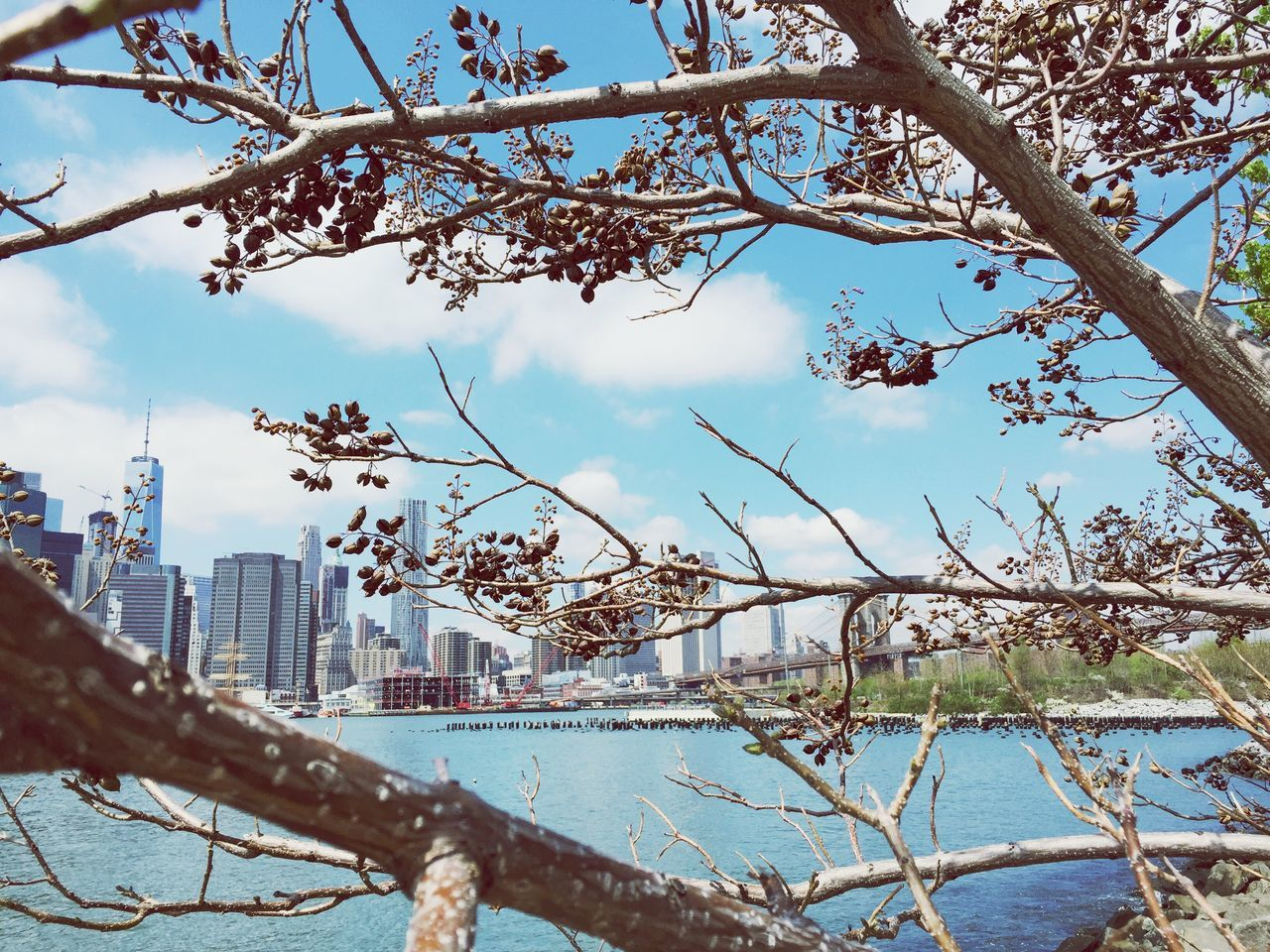 tree, growth, branch, day, sky, nature, outdoors, city, no people, architecture, beauty in nature, cityscape, skyscraper, water, built structure, building exterior, bare tree, flower, freshness, close-up