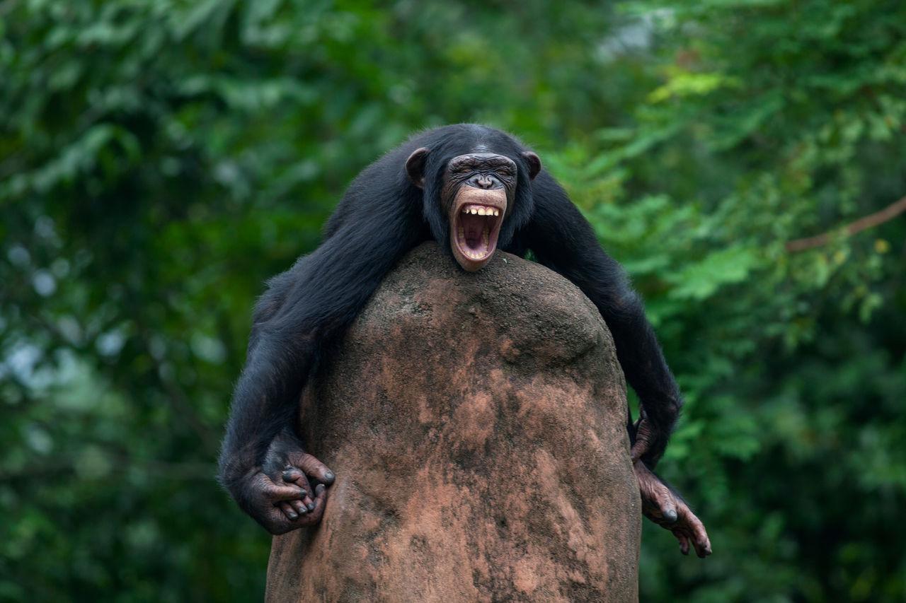 Beautiful stock photos of lustige tiere, Aggression, Angry, Animal Themes, Animal Wildlife
