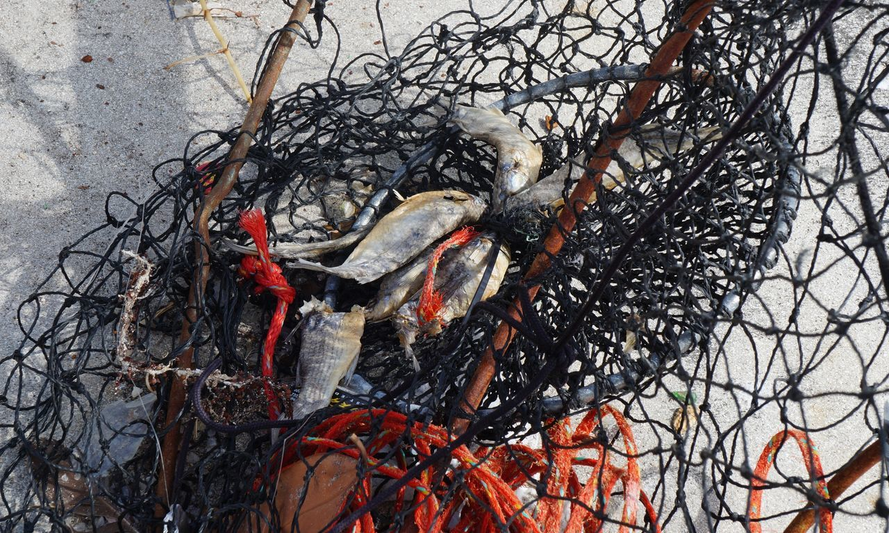 Animal Themes Dead Animal Fish Fishing Nature Net Outdoors Sad