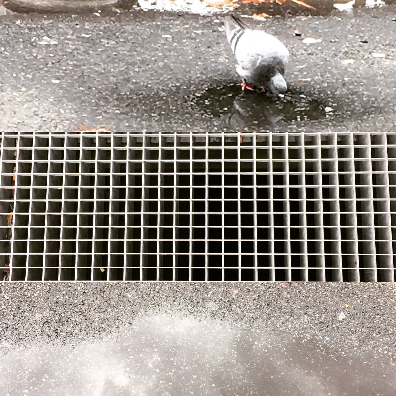 High Angle View Metal Grate Oiseux Outdoors Paris, France  Street Arts  Streetphotography Water