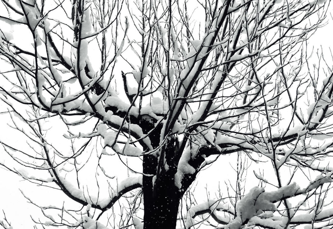 wintertime tree Wintertime Bare Tree Beauty In Nature Branch Close-up Day Dead Plant Dead Tree Nature No People Outdoors Sky Snow Snowy Day Tranquility Tree Tree Trunk