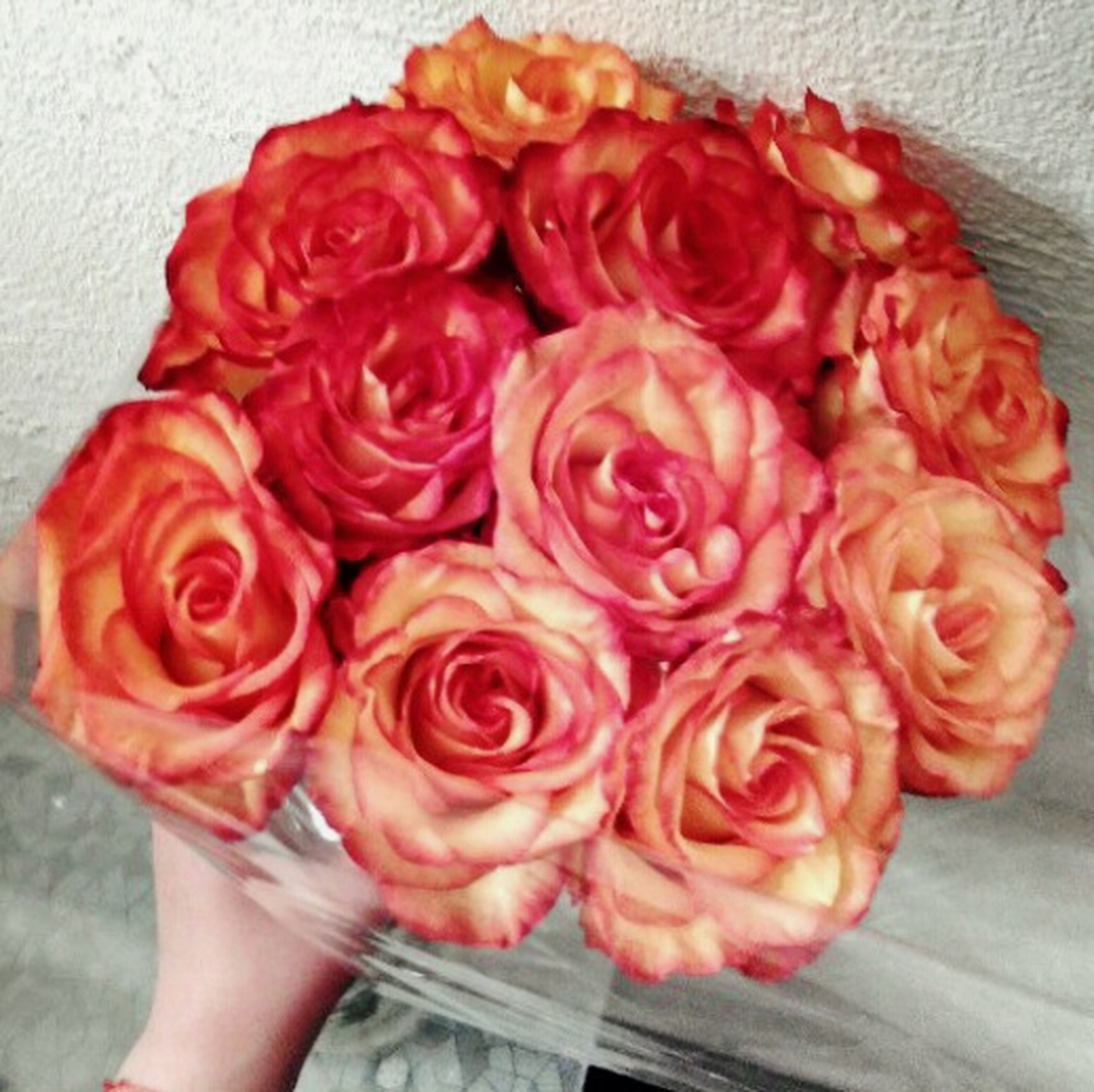 flower, freshness, petal, indoors, rose - flower, fragility, red, high angle view, flower head, bouquet, rose, person, pink color, close-up, holding, directly above, vase, beauty in nature
