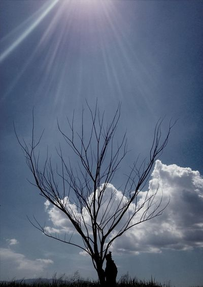 Taking Photos Tree Thailand_allshots EyeEm Nature Lover
