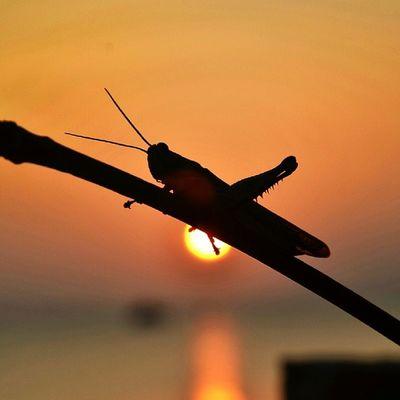 Coucher de soleil à Koh Phayam Travel