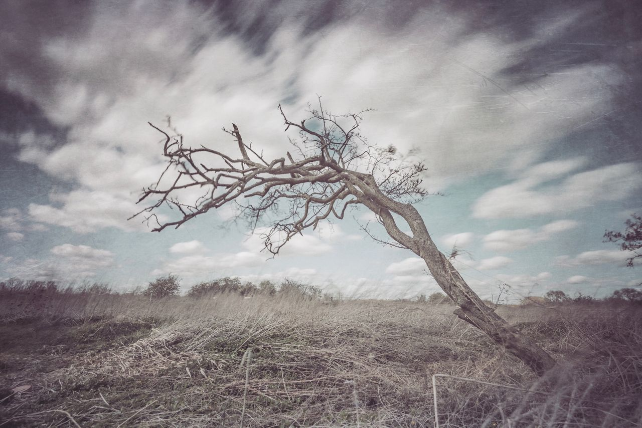 Lean | Here I am Not quite dying My body left to rot in a hollow tree Its branches throwing shadows On the gallows for me And the next day And the next And another day DB. Mextures Trees Lonely Tree TreePorn Tree_collection  Trees And Sky Clouds And Sky Cloudporn Long Exposure Skyporn No People Bare Tree