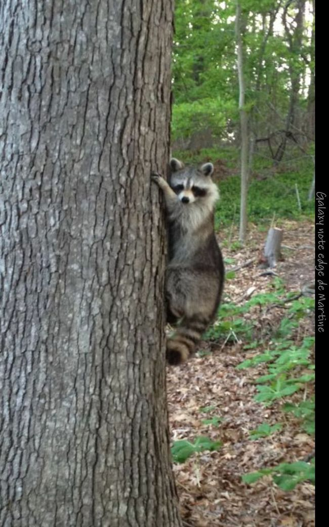 That's Our Friend In New Jersey...United States Of America By My Cousine Frédérique Best EyeEm Shot Tree_collection  Beauty Of Nature Hello World Enjoying Life Peace &love With Animals😊😆😎😻🙈🙉🙊💋💖