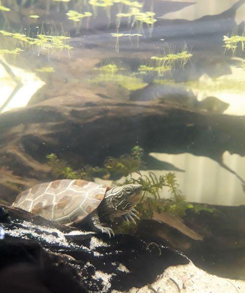 Marsi Marsimoto Aquarium Nature No People One Animal Reptile Sea Life Swimming UnderSea Underwater Water