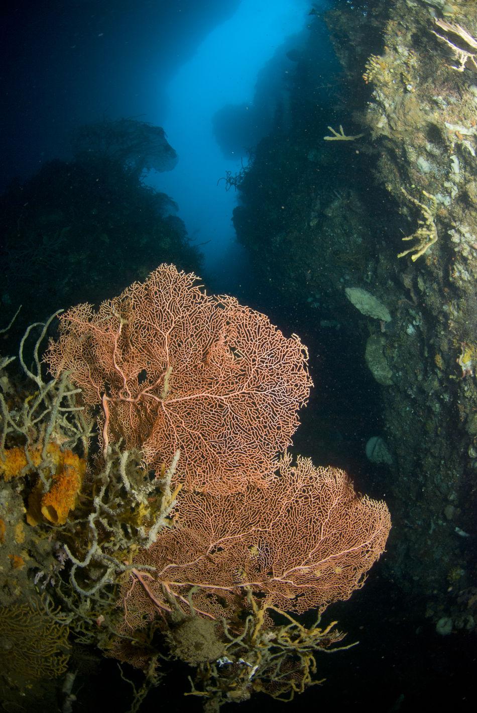Beauty In Nature Close-up Coral Deepfreeze Multi Colored Nature No People Sea Fan Sea Life UnderSea Underwater