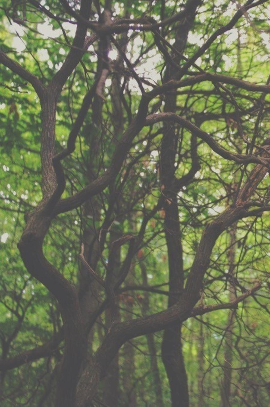 happily entangled ❤ IvyandOak Naturelovers Trees Autumn