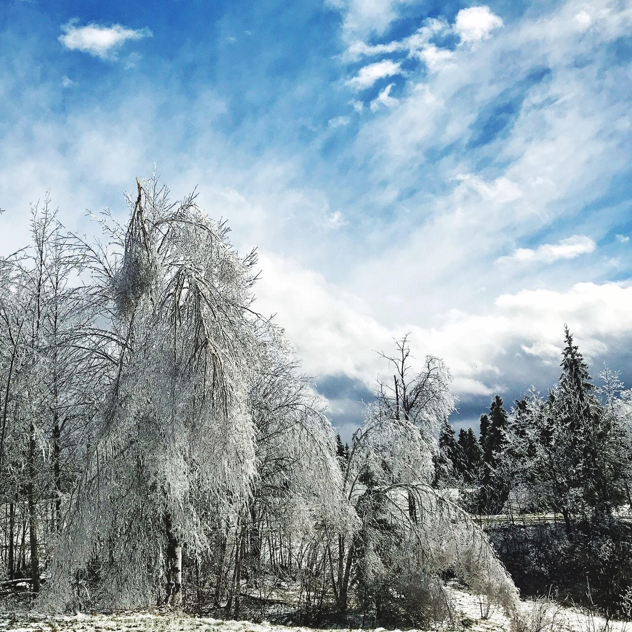 April ice storm Nature Beauty In Nature Cloud - Sky Outdoors Landscape Iphonography Countryside Tree Ice
