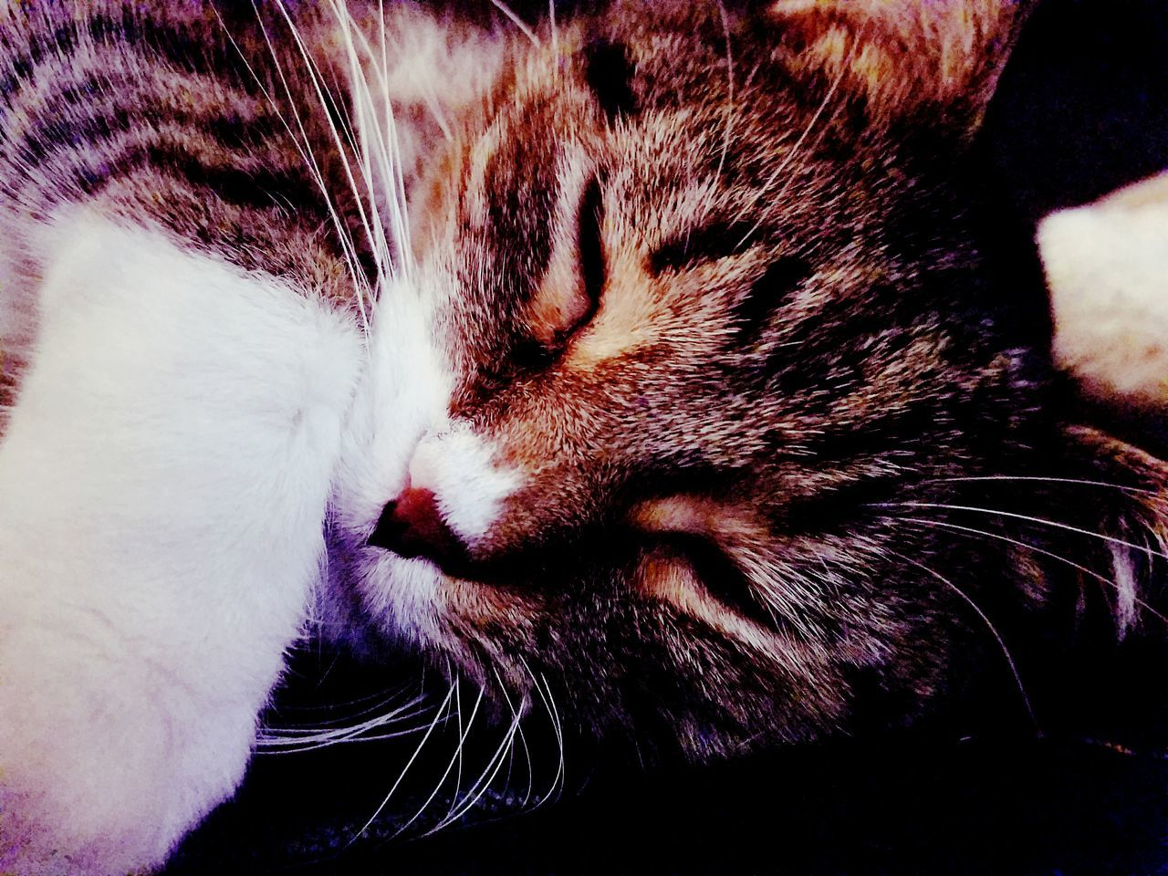Close-up Domestic Cat Indoors  Domestic Animals Animal Themes Tabby Mix Yellow Eyes Feline One Animal Tabby Whisker Looking At Camera Animal Photography No People