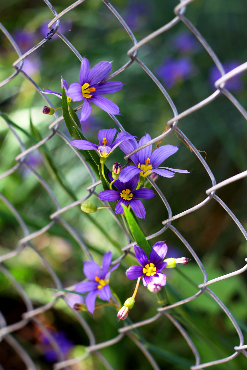 flower, fragility, nature, growth, petal, beauty in nature, purple, no people, day, plant, outdoors, freshness, flower head, close-up, blooming