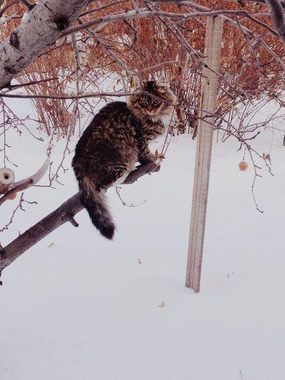 Cat Winter Snow Animals