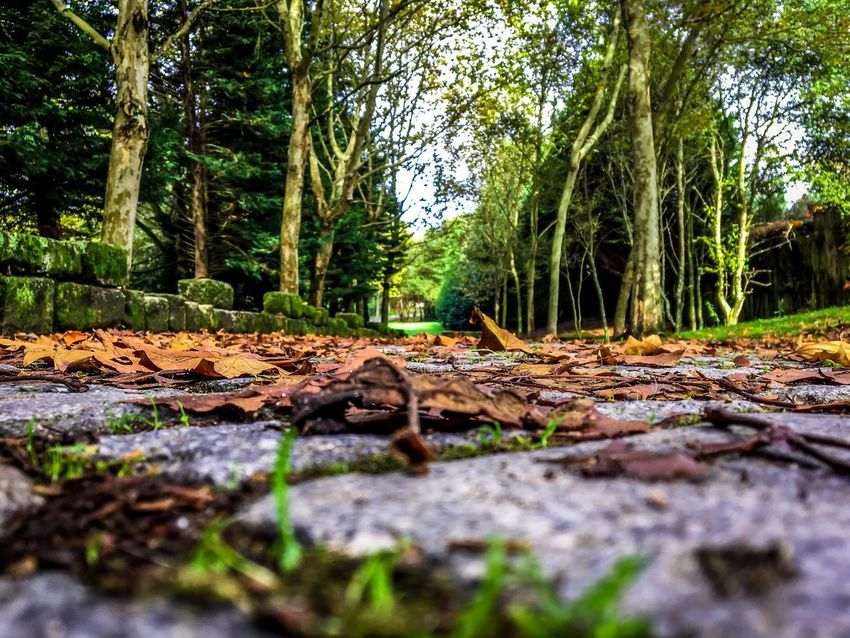 Tree Tree Trunk Forest Nature Leaf Surface Level Outdoors No People Fallen Day Growth Autumn Tranquility Scenics Beauty In Nature