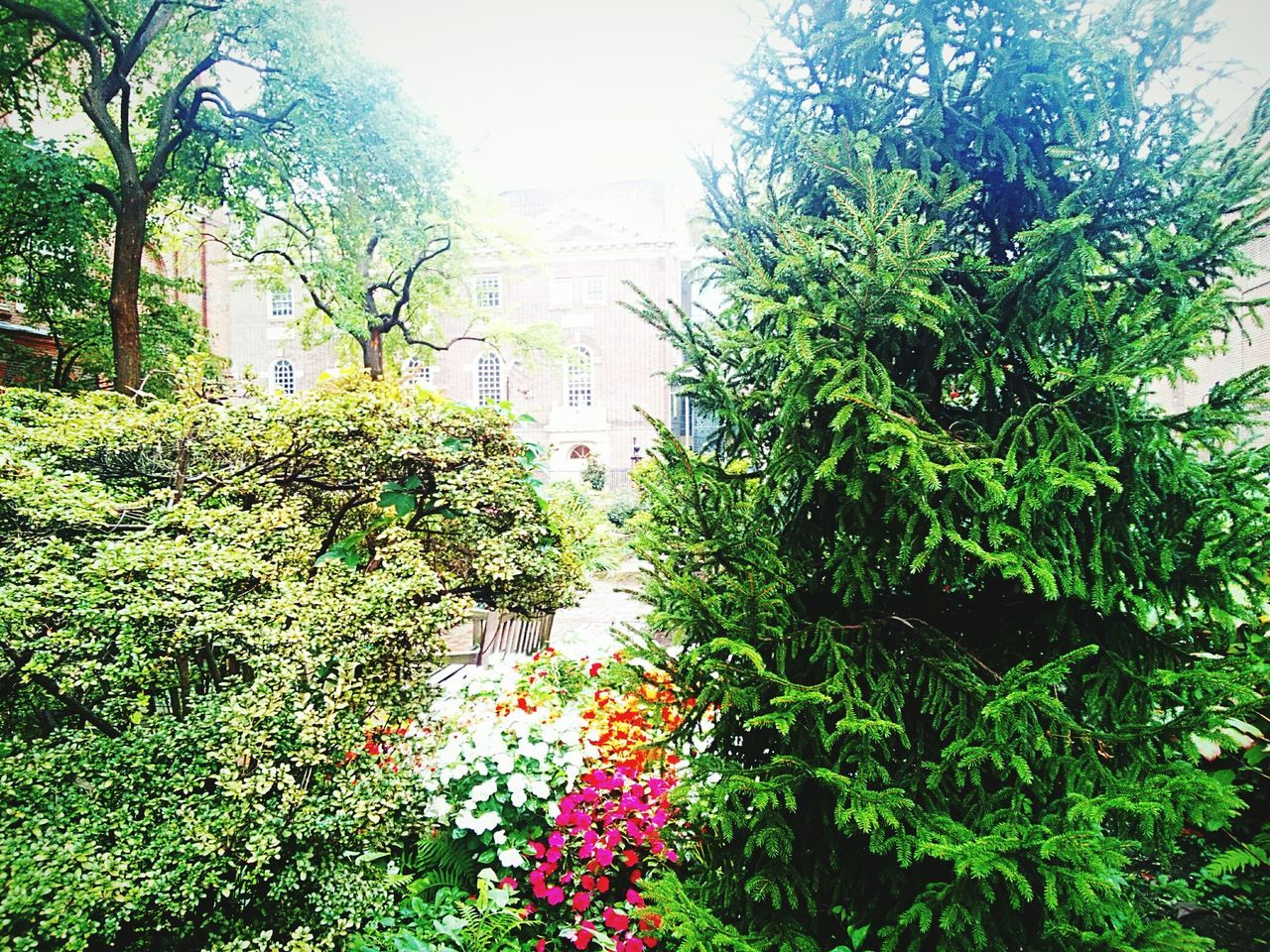 growth, plant, flower, nature, green color, outdoors, tree, day, beauty in nature, no people, freshness, fragility