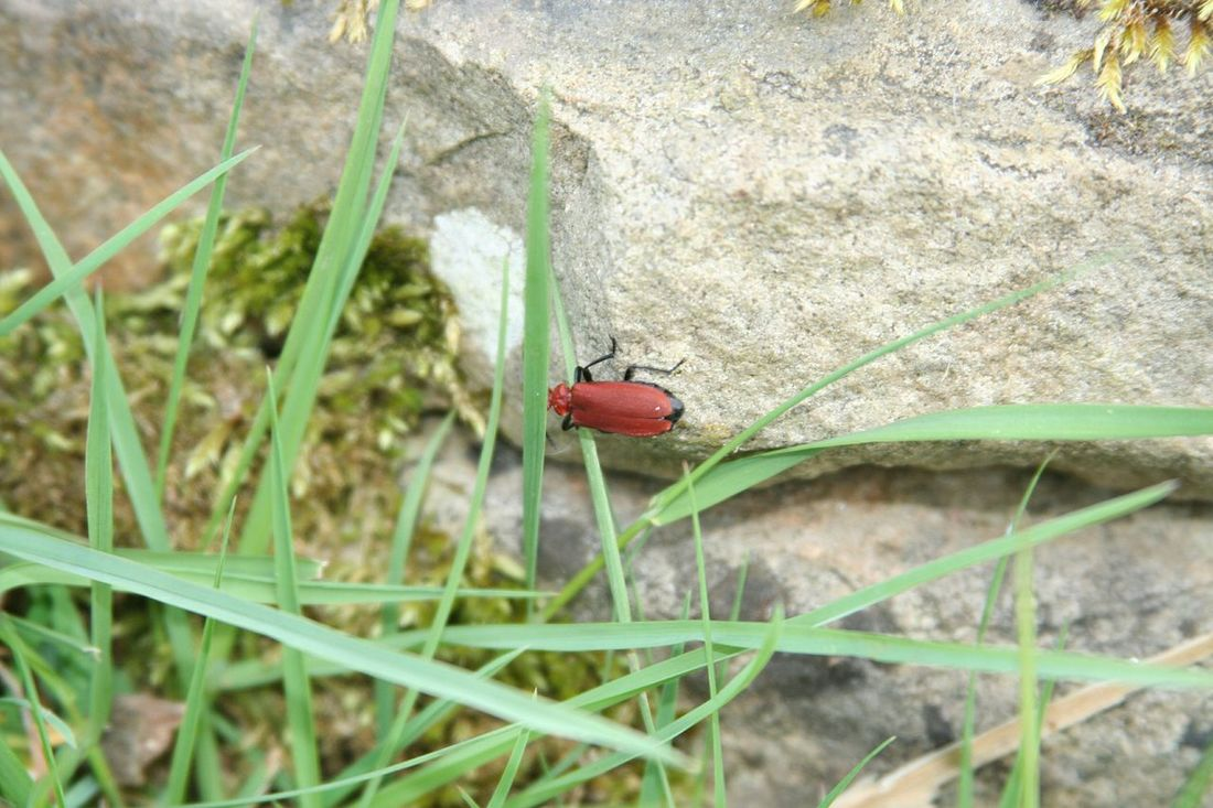 Bug Taking Photos Check This Out Bugs Insect Photography Nature Photography Nature_collection Streamzoofamily Canon