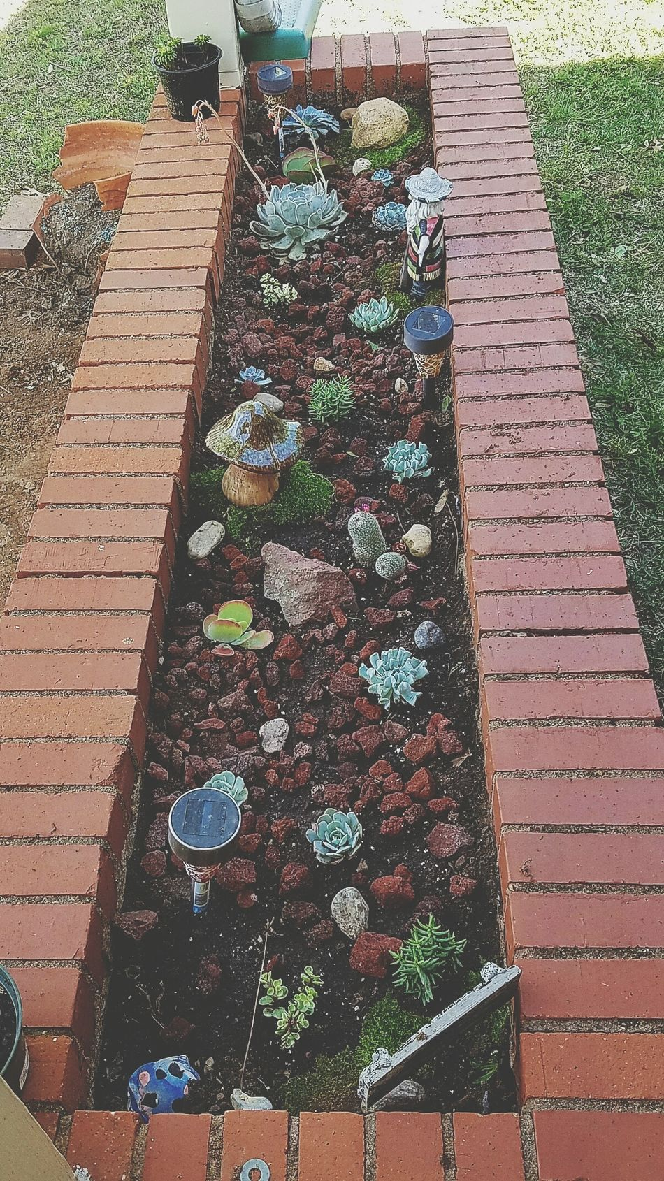 Taking Photos Check This Out My Cactus Garden Cactus Garden Cactusporn Garden Photography