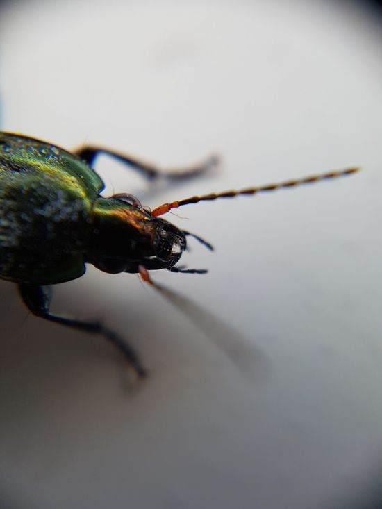 Insect One Animal Animal Themes Animals In The Wild Animal Wildlife Close-up No People Day Outdoors Macro Photography