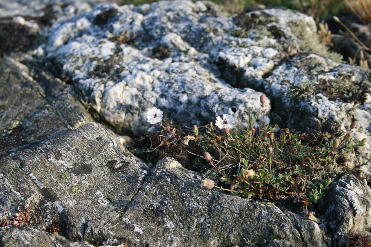 Valö Archipelago Beauty In Nature Close-up Day Elevated View Fjällbacka SKÄRGÅRDEN Focus On Foreground Fragility Ground Growing Growth Moss Natural Pattern Nature No People Outdoors Plant Rock Rock - Object Rock Formation Schärengarten Selective Focus Skärgård Tranquility Valö Island