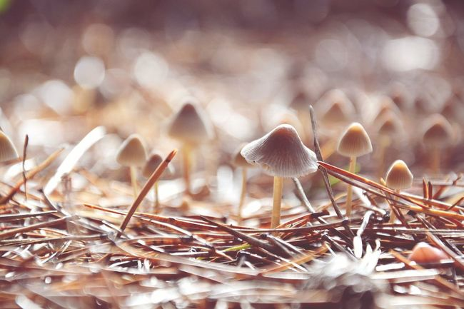 Nature Day Mushroom Outdoors Winter Autumn Autumn Colors Colorful Colour Of Life No People Fantasy Favorite Photo Forest Popular Photography Time Camera Photographer Photooftheday Webstagram You Days  Relaxing Objects