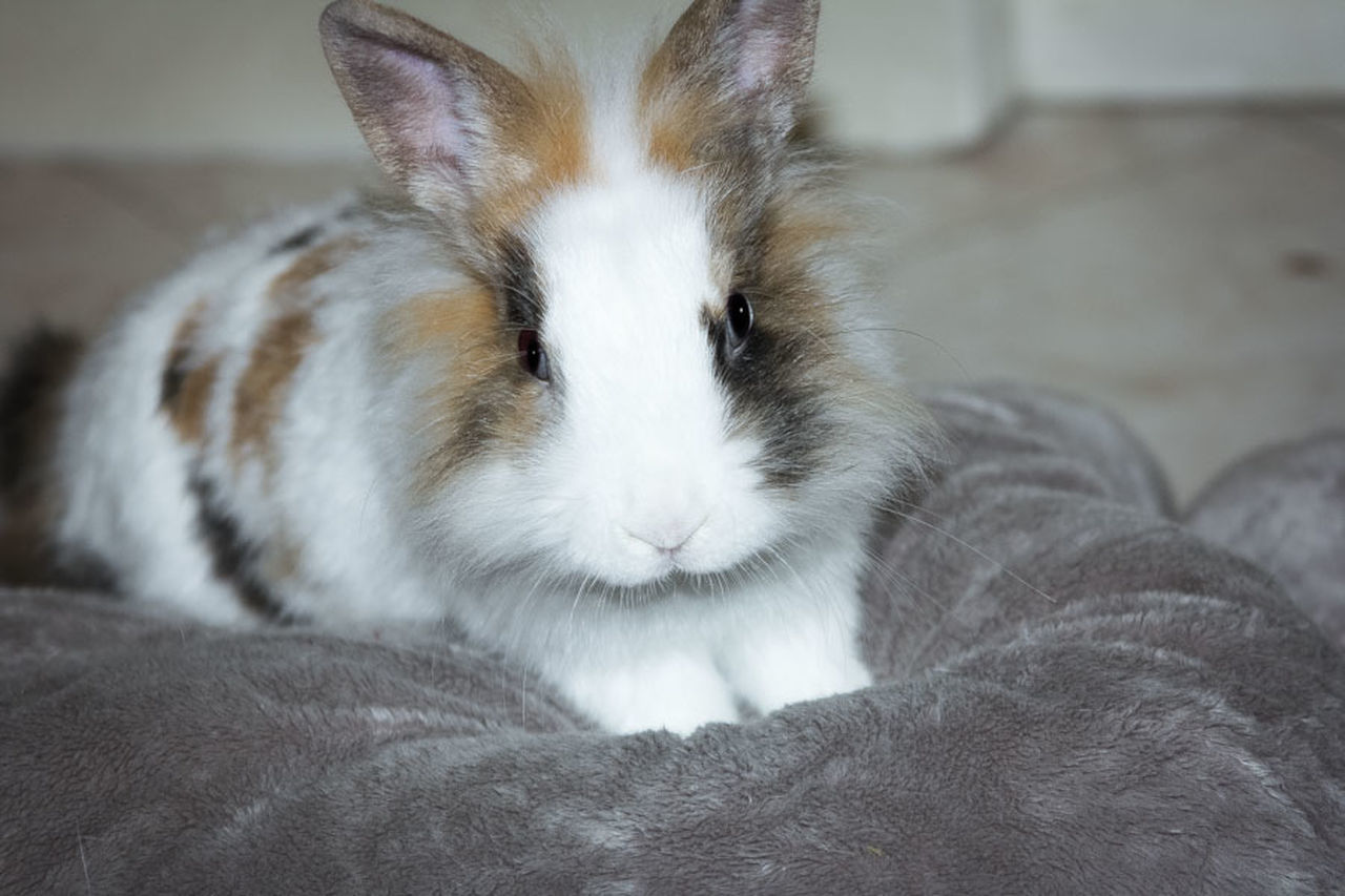 ° MyBunny° Animals Bunny  Mybunny Photographer Photographic Memory Photography Photoshoot Sweet