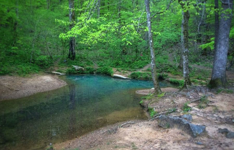 Blue Hole Blue Holes Clean Water Beauty In Nature Natur Rewilding Nature Forest Georgia Mountains Mountain Water Water Tree Tranquility Tranquil Scene EyeEm Nature Lover Scenics Creek Stream Stream - Flowing Water Springwater  No People Outdoors Get Outside Pigeon Mountain