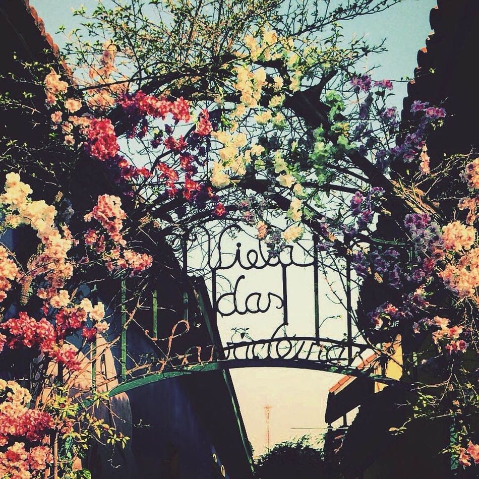 Flower Beauty In Nature Tree Branch Growth Low Angle View Freshness Sky Nature Plant Decoration Outdoors Day Fragility Branches Scenics Bridge No People Blossom Garden Colors Flowers Garden Photography Embu Entryway