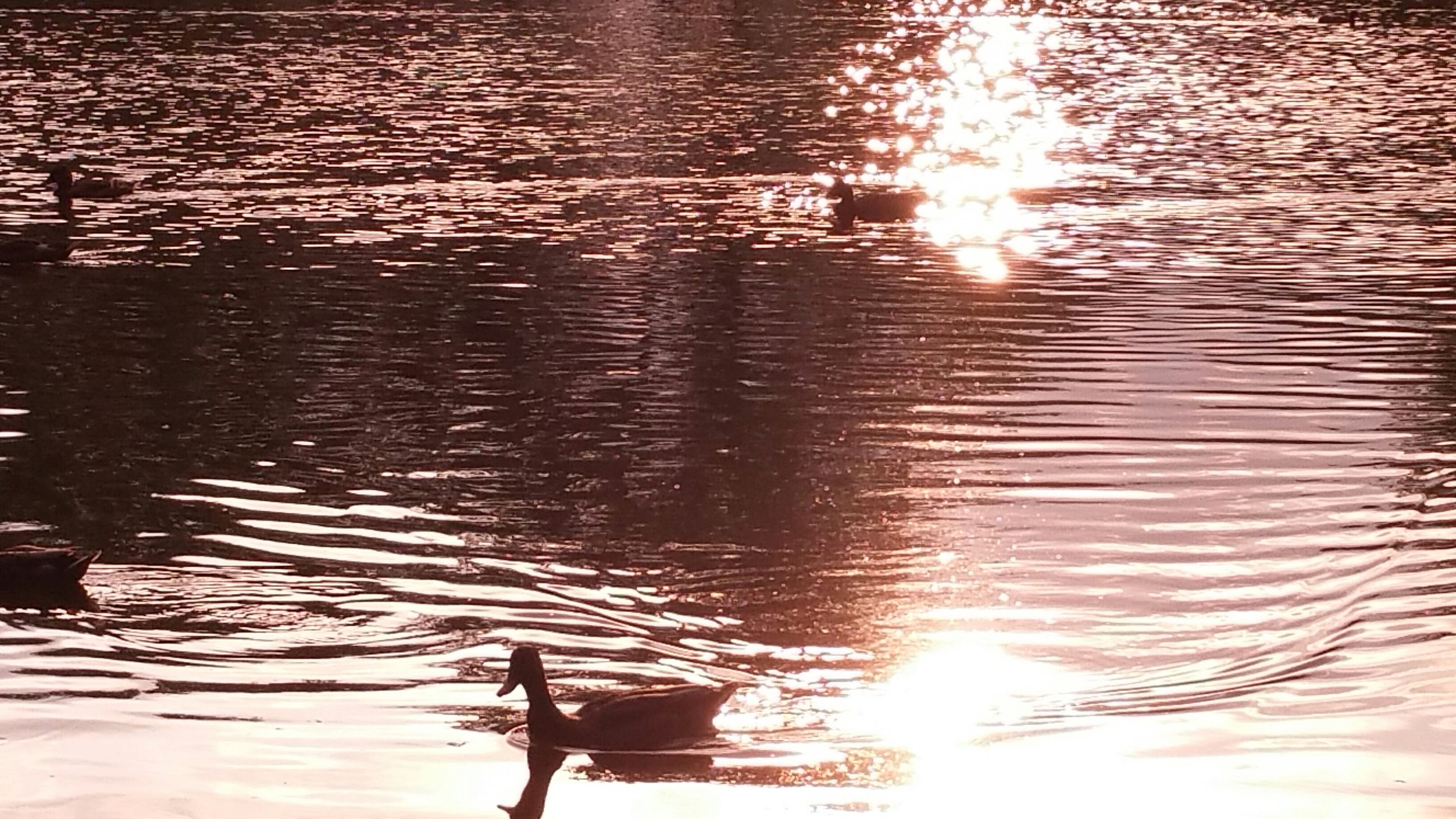 water, reflection, sun, sunset, sunlight, lake, silhouette, rippled, nautical vessel, nature, tranquility, waterfront, transportation, outdoors, mode of transport, sunbeam, high angle view, beauty in nature, tranquil scene, river