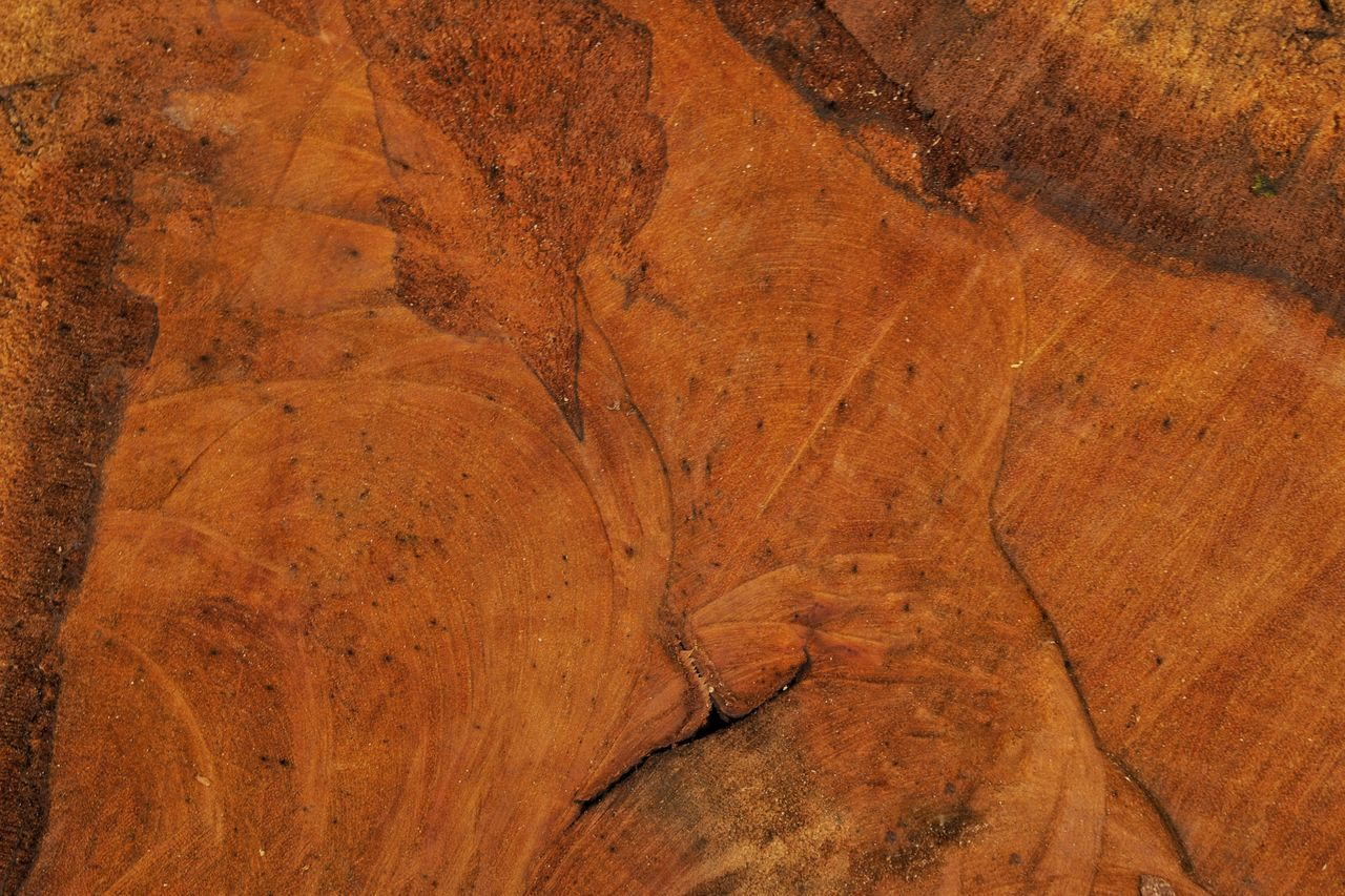 Wooden log texture Brown Textured  Backgrounds Close-up Outdoors Wooden Wooden Log Nature Textured  Copy Space Nature Pattern Blank Empty Space