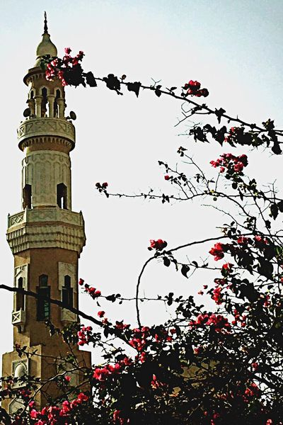 Mosque Flowers Beauty Nature Nature_collection Taking Photos Relaxing Check This Out Prayer Capture The Moment ♡