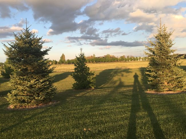 July 15, 2016 Beauty In Nature Cloud Cloud - Sky Cloudy Day Fargo Field Grass Growth Idyllic Landscape Nature No People North Dakota Outdoors Plant Rural Scene Scenics Sky South Fargo Summer Sunset Tranquil Scene Tranquility Tree