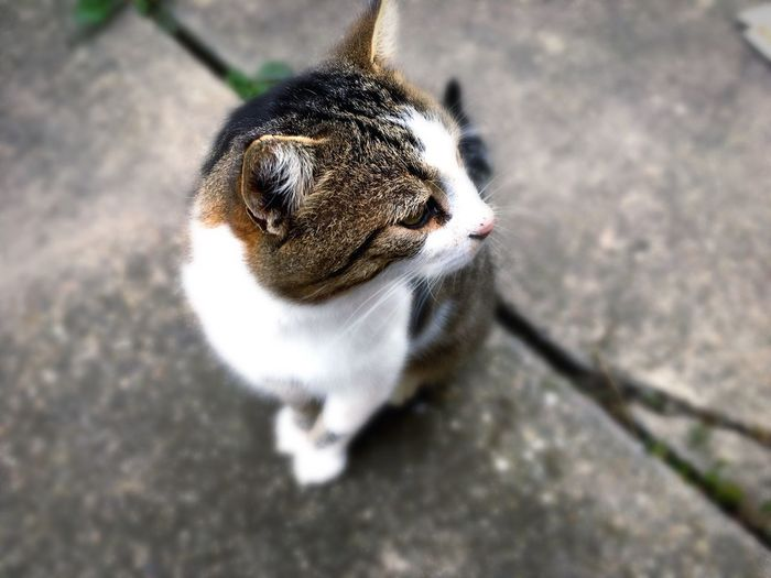 Alertness Animal Animals Close-up Day Focus On Foreground Nature Outdoors Pet Portrait Selective Focus Whisker Maximum Closeness Focus Object