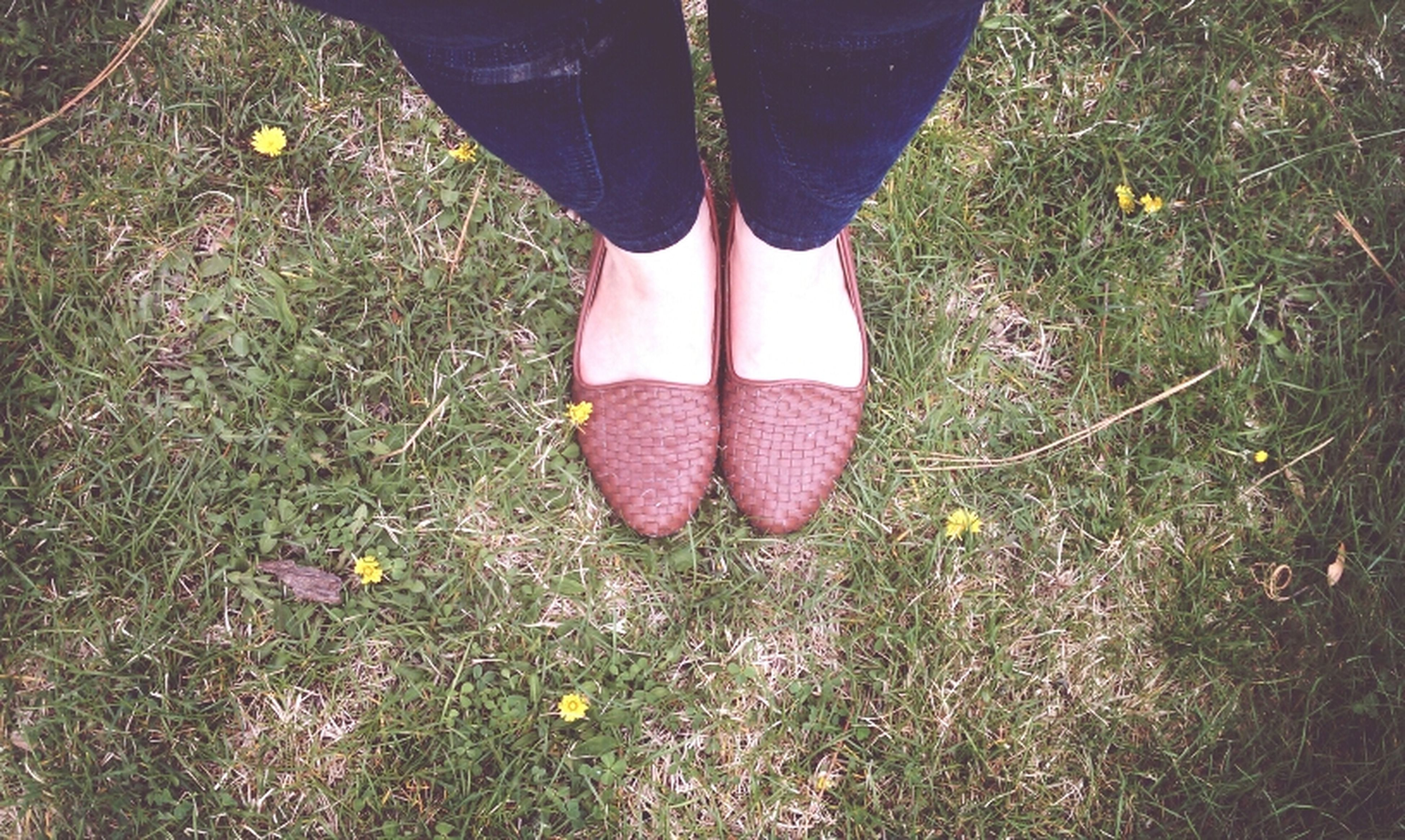low section, person, shoe, grass, standing, lifestyles, footwear, leisure activity, high angle view, field, human foot, jeans, casual clothing, grassy, canvas shoe, fashion