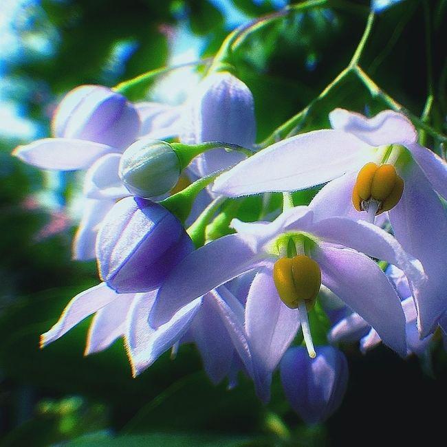 #flowers#purple