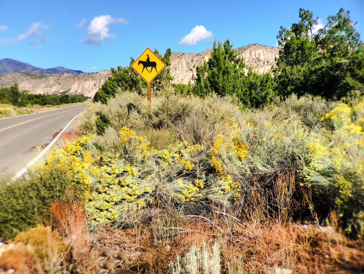 Road Yellow Landscape Plant Mountain Sky Day Outdoors Solitude Tranquil Scene Countryside Growth Blue Nature Remote Tranquility Country Road Green Color Non-urban Scene Long Sign Horses Horse Riding